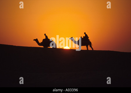 Camel Riders at Sunset, Pushkar, Thar Desert, Rajasthan, India - Stock Image