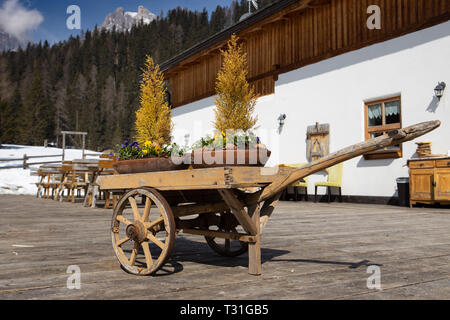 Picture of an old vintage wheelbarrow with flowers in it near Cortina d'Ampezzo, Dolomites, Italy - Stock Image