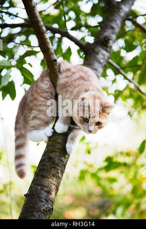 Cat on tree - Stock Image