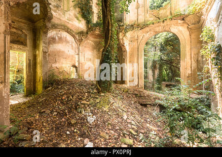 An abandoned villa that is in ruins where a tree is taking over the main room. - Stock Image
