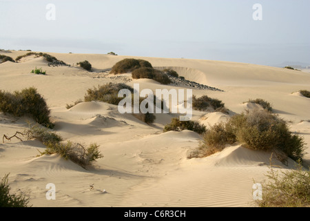 Sand Dunes at the Fuerteventura Nature Reserve Near Corralejo, Fuerteventura, Canary Islands. - Stock Image