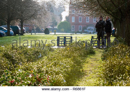 Tenbury Wells, Worcestershire, UK. 4th Dec 2018. Mistletoe for sale by auction at Tenbury Wells. Countryfile were there filming. Burford House. - Stock Image
