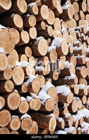 Stacks of sawn cut logs, wood grain and cut ends, with dusting of snow, winter fuel firewood - Stock Image