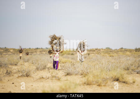 Poor and young children are carrying heavy bunches of dry wood on their heads in the middle of the Thar Desert, Jaisalmer, Rajasthan, India. - Stock Image