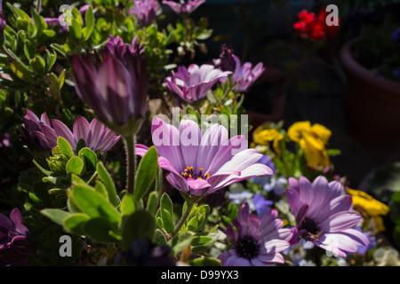 An assortment of garden flowers - Stock Image