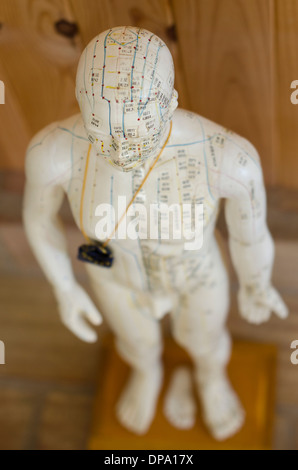 Acupuncture statue showing meridians and Acupuncture points - Stock Image
