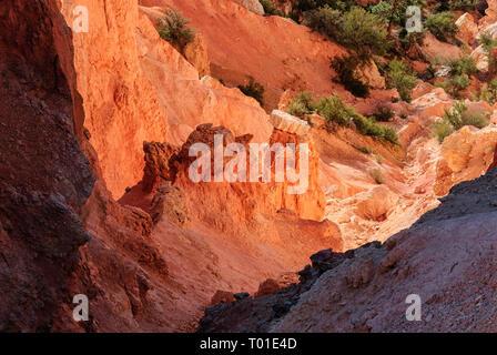 Bryce National Park, Utah, USA - Stock Image