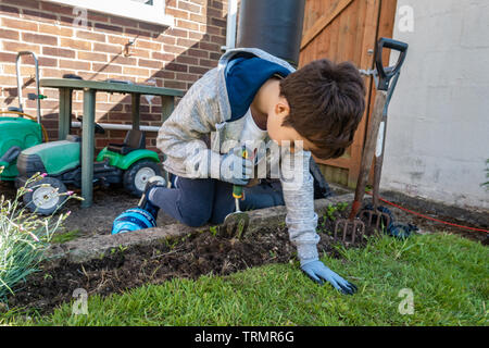 A young boy helping doing weeding, gardening outside in the garden - Stock Image
