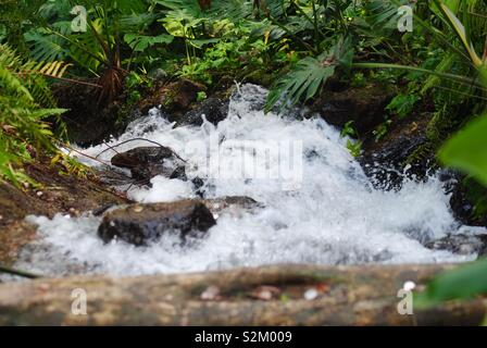 A fast flowing stream splashing through green forest. - Stock Image