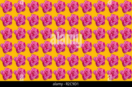 Pink roses with orange background with copy space, idea or concept for a romantic message, proposal, Valentine day, or pattern inspiration - Stock Image