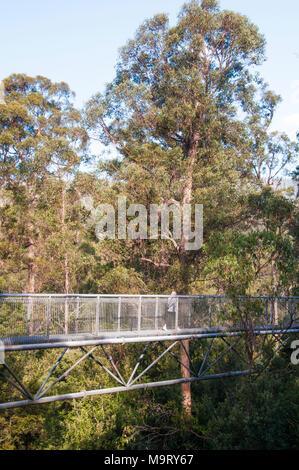 Tahune AirWalk, an overhead walkway within the Tahune Forest Reserve, Geeveston, southern Tasmania, Australia - Stock Image
