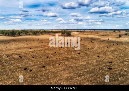 Dry harvested and cropped farm land field near Moree regional agricultural town on artesian basin in Australian NSW outback. Black soils feed black an - Stock Image
