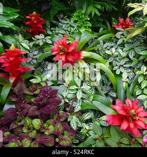 Tropical Garden with bromeliads - Stock Image