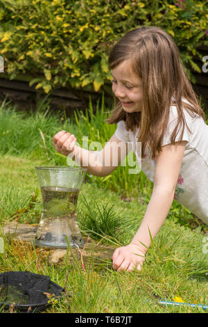 yong girl, eight years old, pond dipping, catching pond life, tadpoles, dragonfly larvae, in net, and putting them in jar, garden wildlife pond, - Stock Image
