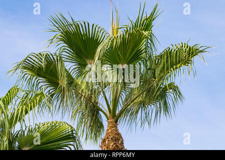 Low angle view of tropical palm tree - Stock Image
