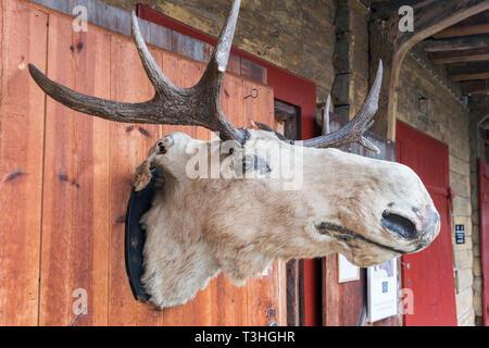 Moose head Bryggen Bergen Norway - Stock Image