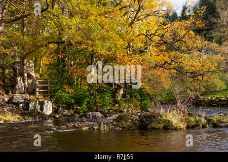 Trees and river in autumn at Betws-y-Coed, Snowdonia, North Wales - Stock Image