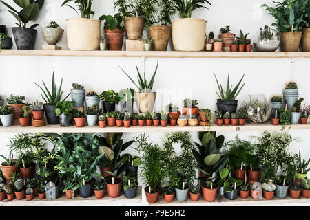 Large selection of plants in flowerpots on shelves in a plant shop. - Stock Image