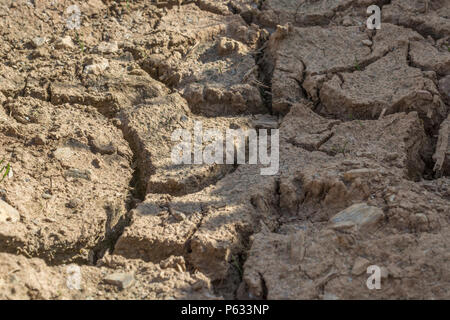Deep cracks in water parched soil of cropped area - metaphor for drought, crop failure, crop losses, famine, heatwave concept, cracks earth. - Stock Image
