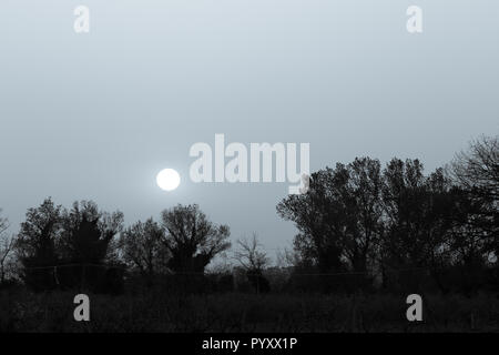 Filtered sunset over trees silhouettes - Stock Image