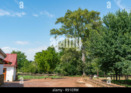 Irene Dairy Farm is a working dairy farm in Irene, Pretoria, where research is being done. - Stock Image