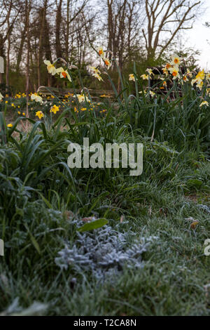 Henlow, Bedfordshire, UK. 1st Apr, 2019. A cold frosty start to the day at Henlow Bridge Lakes campsite in Bedfordshire. Credit: Mick Flynn/Alamy Live News - Stock Image