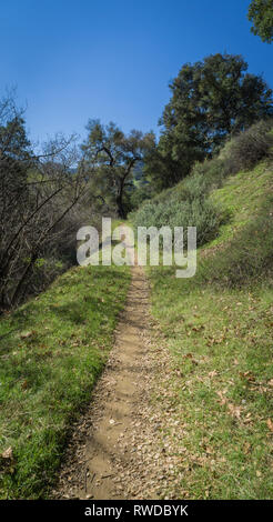 Long straight dirt walking and hiking trail leads into the green woods of southern California. - Stock Image