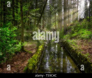 DE - BAVARIA: Schlossberg Forest at Lenggries   (HDR-Image) - Stock Image
