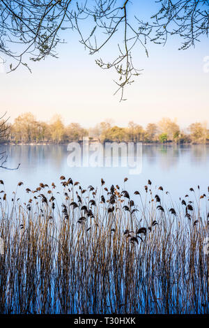 An early Spring morning on one of the lakes at Cotswold Water Park - Stock Image