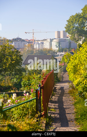 Allotment gardens in Tanto on Sodermalm with the newly built Liljeholmskajen in the background - Stock Image