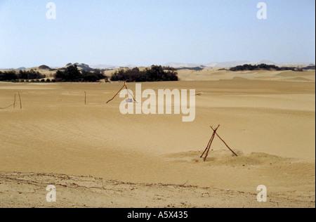 Oasis in the Peruvian Desert, Peru - Stock Image