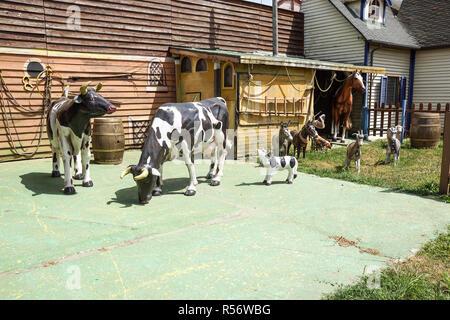 Landrace zoo farm from plastic hog feeder on modern plastic flooring on ranch - Stock Image