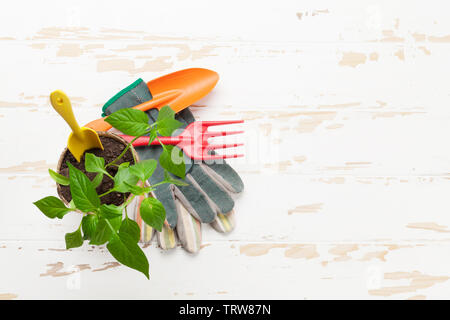Gardening tools and seedlings on garden table. Top view with copy space - Stock Image
