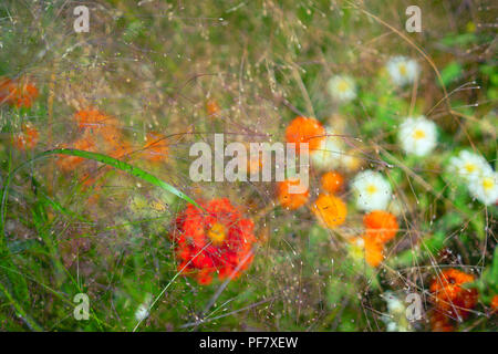 Background of different summer flowers - Stock Image