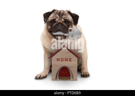 happy pug puppy dog with house key sitting down with miniature house, isolated on white background - Stock Image