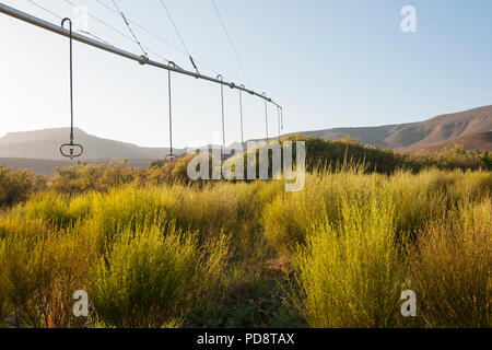 Irrigation system for rooibos tea plantations in the Cederberg mountains in South Africa. - Stock Image