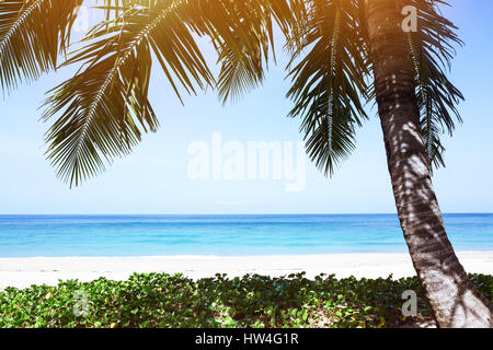 Tropical palm tree beach resort - Stock Image