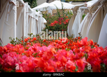 white cabanas with bougainvillea in foreground,  Maui Hawaii, Four Seasons Resort - Stock Image