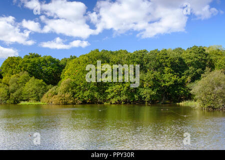 New Forest, Hampshire, UK. Weather 28th September 2018 New Forest Hampshire . A beautiful autumnal day in The New Forest a glorious sunny day with golden autumnal colours . Credit Paul Chambers /Alamy Live News - Stock Image