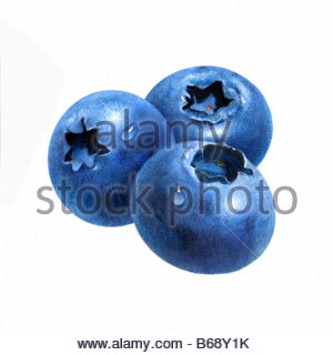 Blueberries-Group of 3 - Stock Image