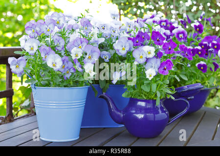 Purple, blue and violet pansy flowers in 3 pots and an enameled jug on a wooden balcony table in spring, background template - Stock Image