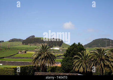 Palm trees in the foreground with fields behind in The Azores - Stock Image