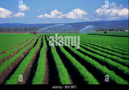 Crop Irrigation - Stock Image