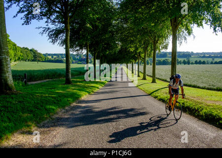 Cranbourne Chase Dorset 11th June 2018 Glorious evening on the Cranbourne Chase Clear blue skies with no haze a  Avenue of beech trees, Moor Crichel, Dorset, England .  © pcp/ Alamy Stock Photo (Default)/Alamy Live News - Stock Image