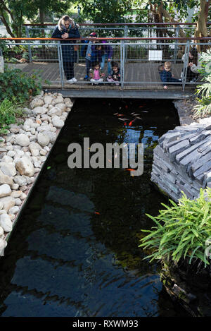 Asian grandmother and children with a European mother and child looking at goldfish in the pond below. - Stock Image