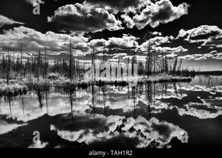 Clouds and boreal forest reflected in wetland Near Yellowknife Northwest Territories Canada - Stock Image