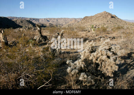 Mojave Desert; Joshua Tree National Park; California - Stock Image