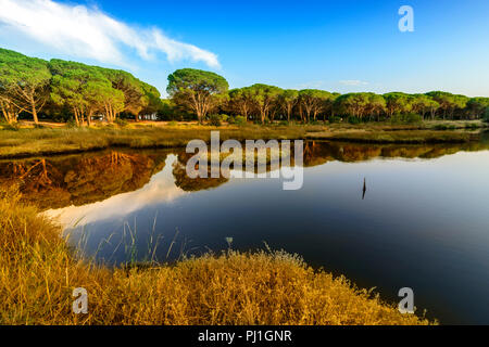 Panorama of the Osala river, a river that flows towards the sea in Cala Osalla, luxuriant Mediterranean vegetation with pines growing on the rocks. - Stock Image