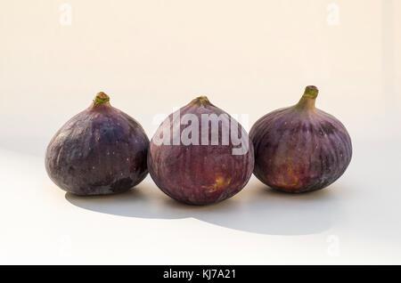 Three ripe home-grown brown fresh figs in UK - Stock Image