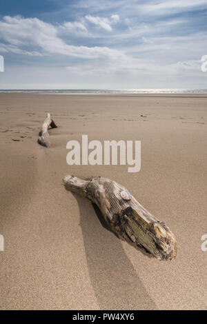 An empty beach and a piece of drift wood shaped like a serpent providing a surreal feeling to the scene - Stock Image